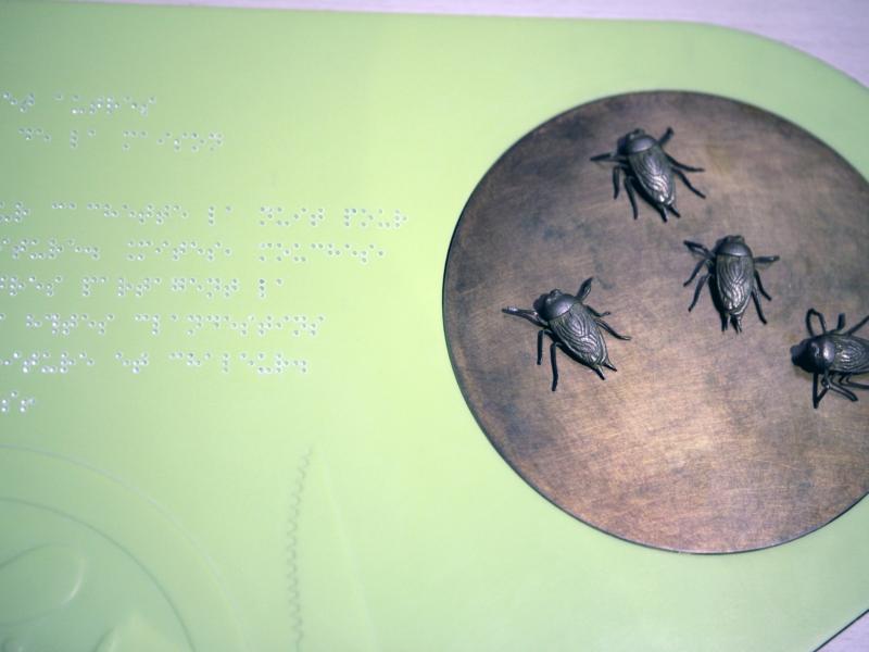 Panneau explicatif sur les blattes, Muséum National d'Histoire Naturelle