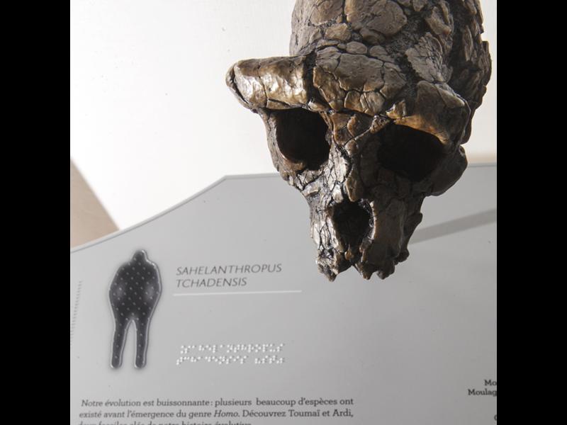 Crâne et panneau tactile au Musée de l'Homme