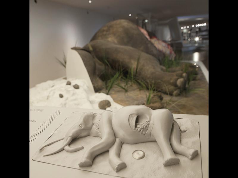 Maquette tactile d'un éléphant
